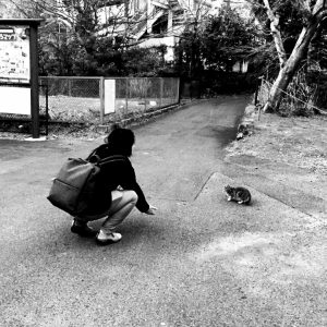 大平台の猫の写真
