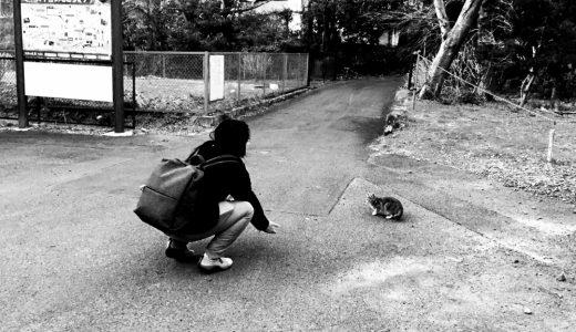 大平台の猫
