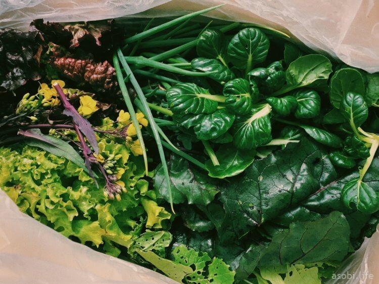 野菜の写真1