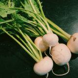 野菜の写真2