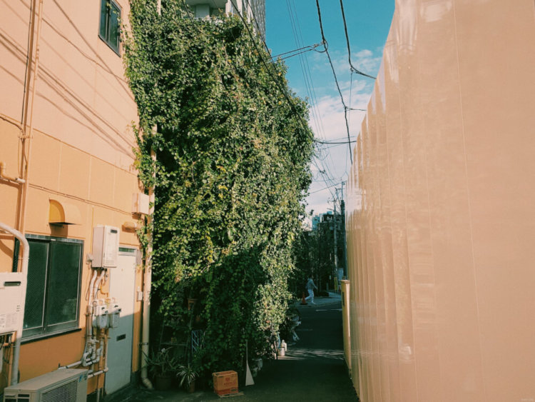 ムギマル2の写真6