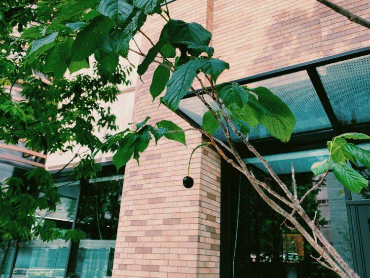 6月の神田スクエアの写真10